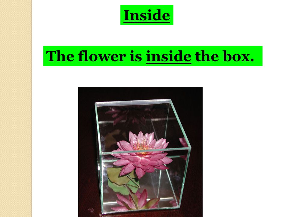 Inside The flower is inside the box.