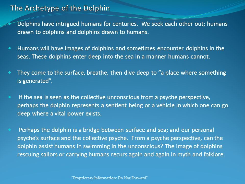 Dolphins have intrigued humans for centuries.