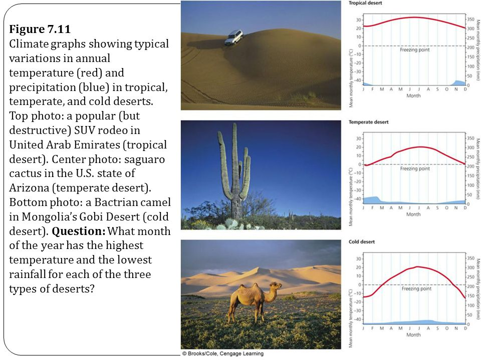 Figure 7.11 Climate graphs showing typical variations in annual temperature (red) and precipitation (blue) in tropical, temperate, and cold deserts.