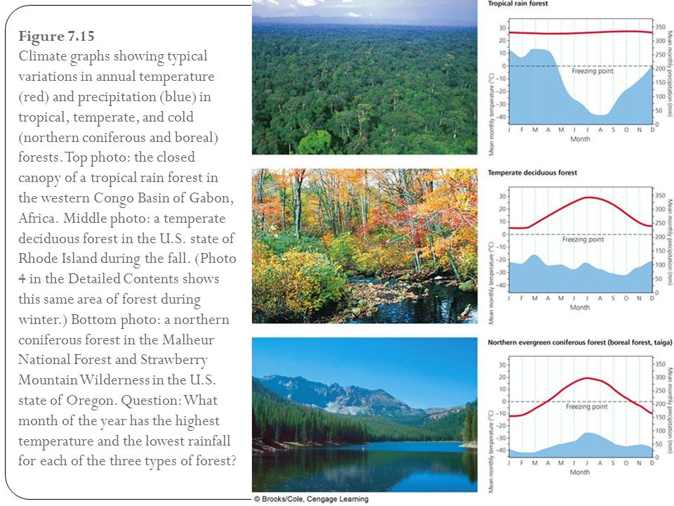 Figure 7.15 Climate graphs showing typical variations in annual temperature (red) and precipitation (blue) in tropical, temperate, and cold (northern coniferous and boreal) forests.