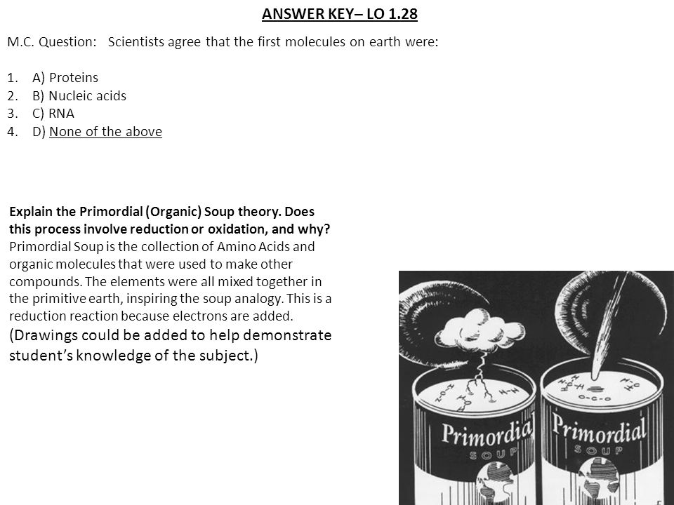 ANSWER KEY– LO 1.28 M.C. Question: Scientists agree that the first molecules on earth were: 1.A) Proteins 2.B) Nucleic acids 3.C) RNA 4.D) None of the