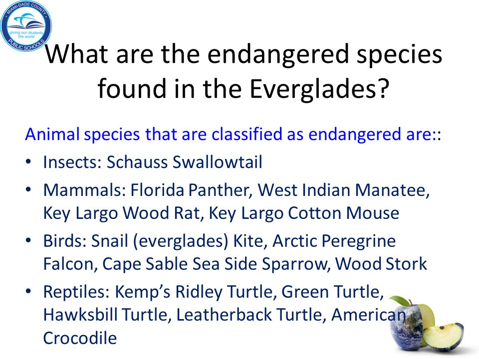 What are the endangered species found in the Everglades? Animal species that are classified as endangered are:: Insects: Schauss Swallowtail Mammals: