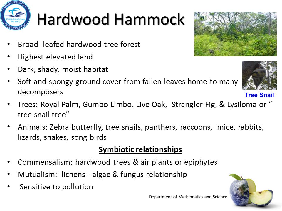 Hardwood Hammock Broad- leafed hardwood tree forest Highest elevated land Dark, shady, moist habitat Soft and spongy ground cover from fallen leaves h