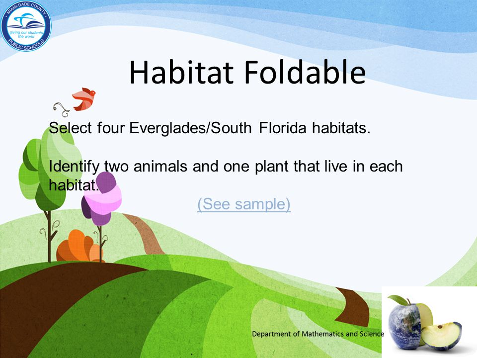 Habitat Foldable Select four Everglades/South Florida habitats. Identify two animals and one plant that live in each habitat. (See sample)