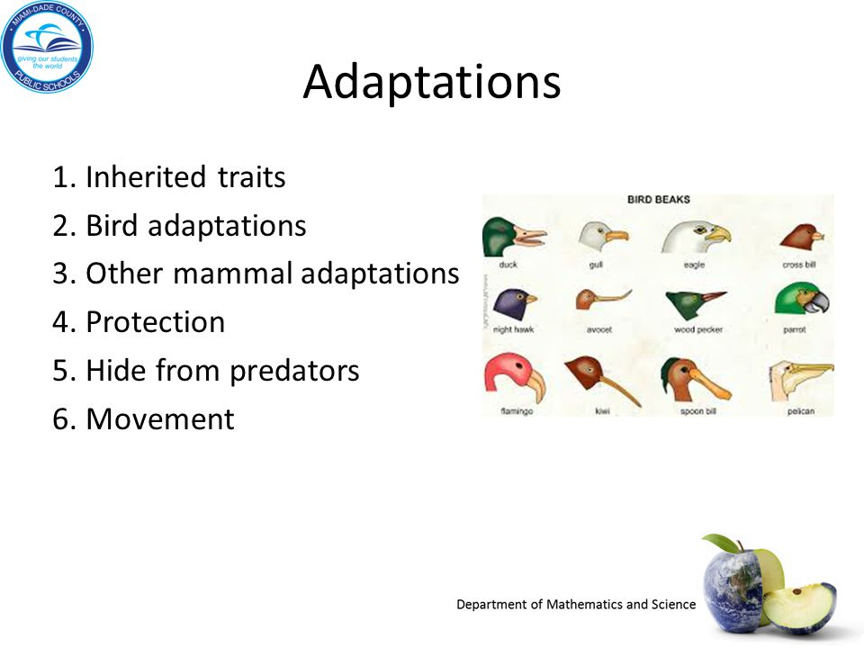 Adaptations 1. Inherited traits 2. Bird adaptations 3. Other mammal adaptations 4. Protection 5. Hide from predators 6. Movement