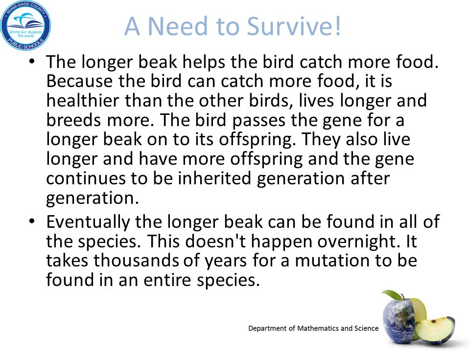 A Need to Survive! The longer beak helps the bird catch more food. Because the bird can catch more food, it is healthier than the other birds, lives l
