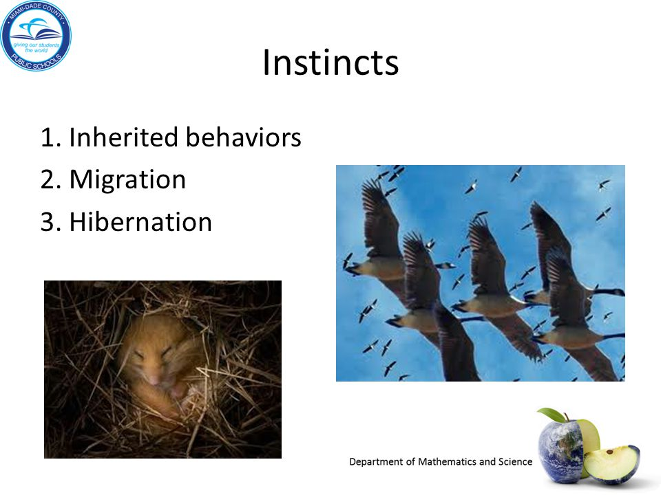 What adaptations of organisms allow them to thrive in their environments.