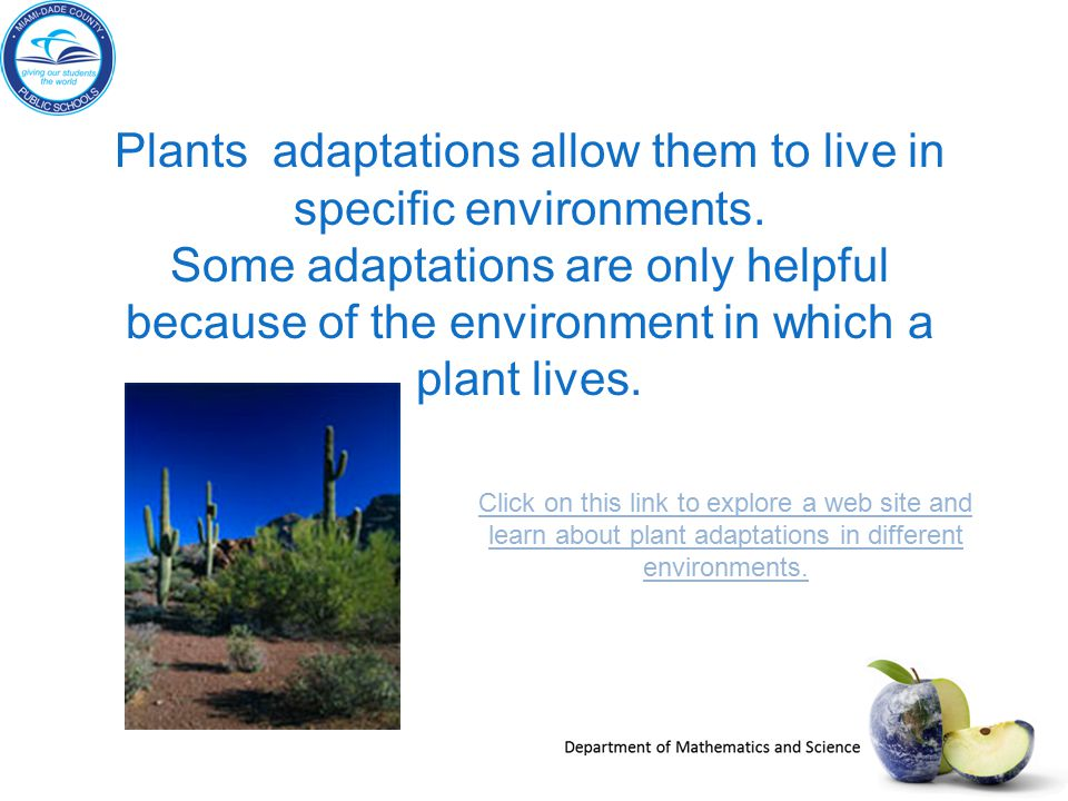 Plants adaptations allow them to live in specific environments. Some adaptations are only helpful because of the environment in which a plant lives. C