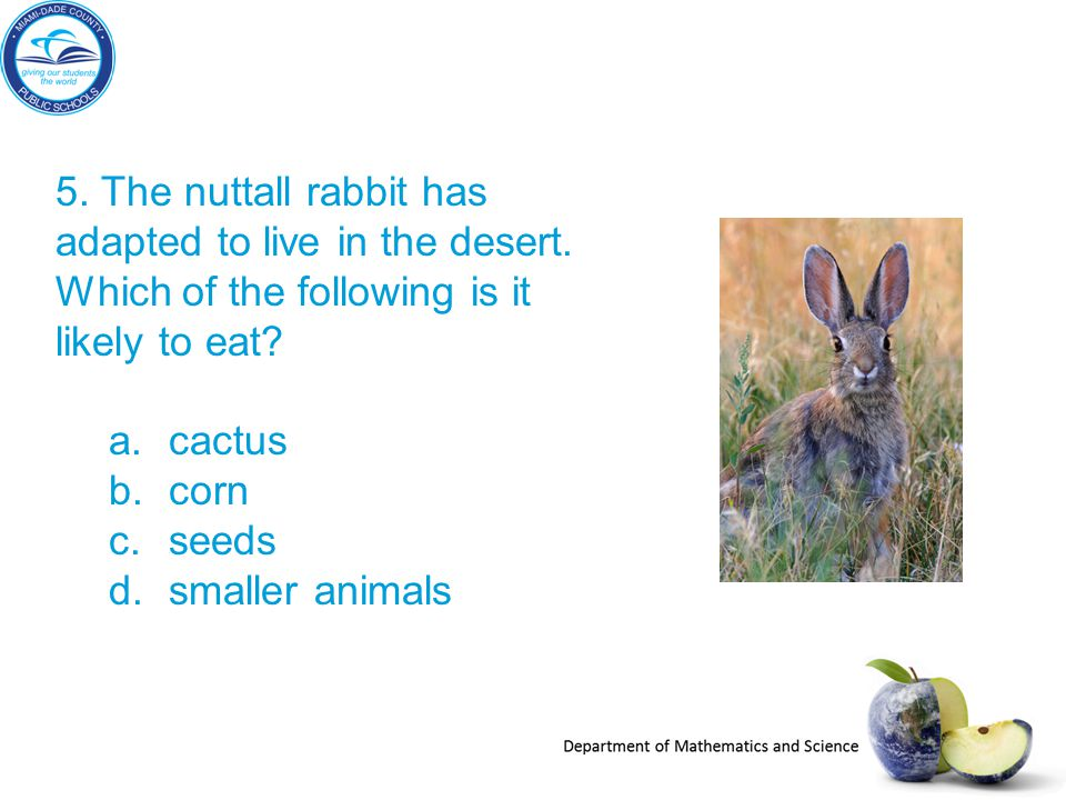 5. The nuttall rabbit has adapted to live in the desert. Which of the following is it likely to eat? a.cactus b.corn c.seeds d.smaller animals
