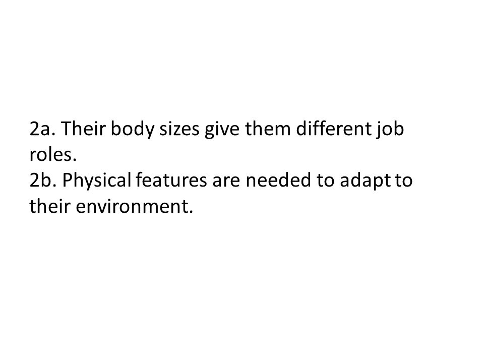 2a. Their body sizes give them different job roles.