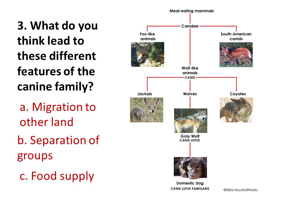 3. What do you think lead to these different features of the canine family.