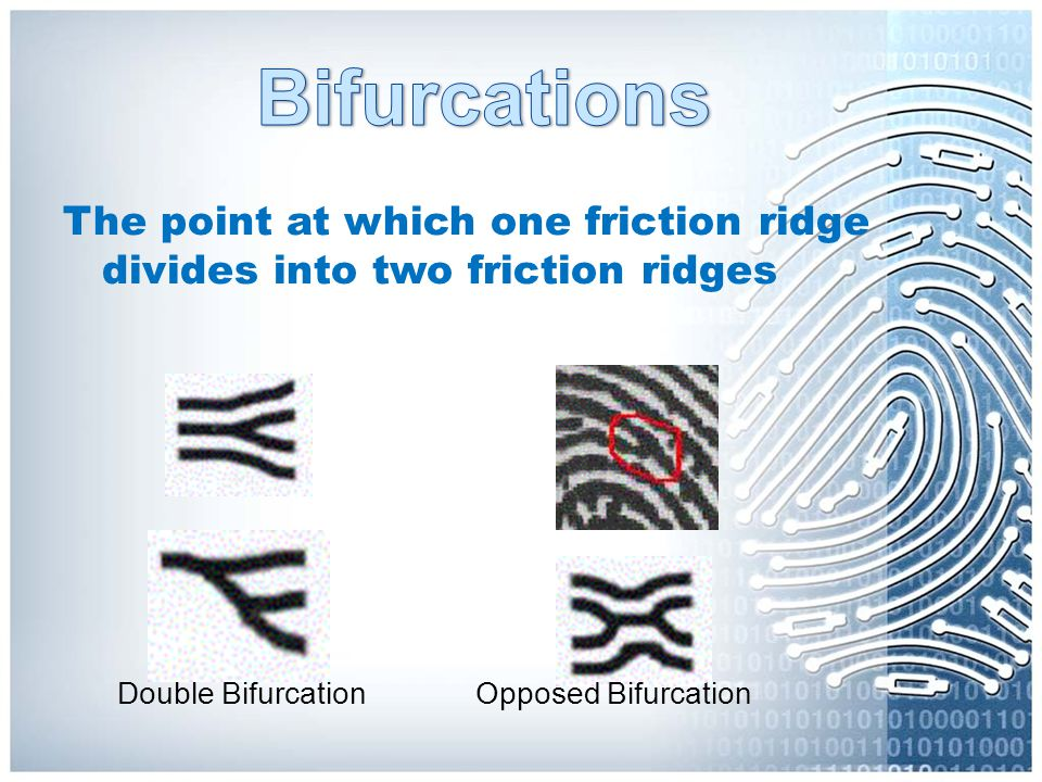 The point at which one friction ridge divides into two friction ridges Double Bifurcation Opposed Bifurcation