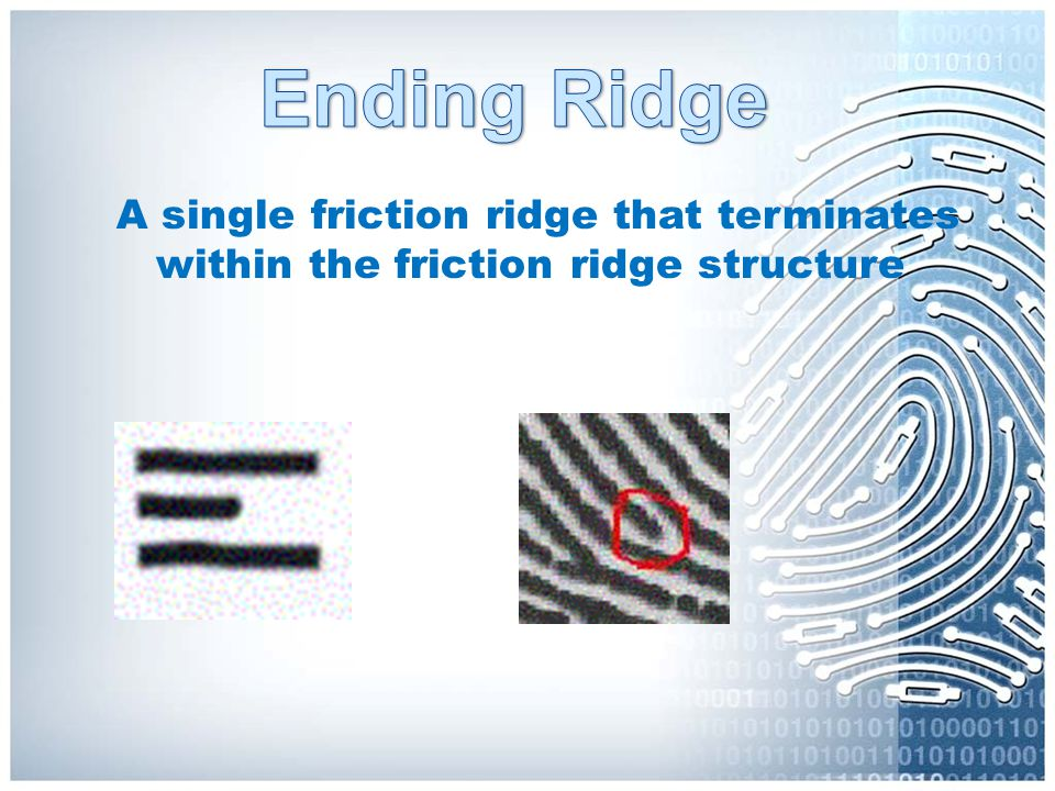 A single friction ridge that terminates within the friction ridge structure