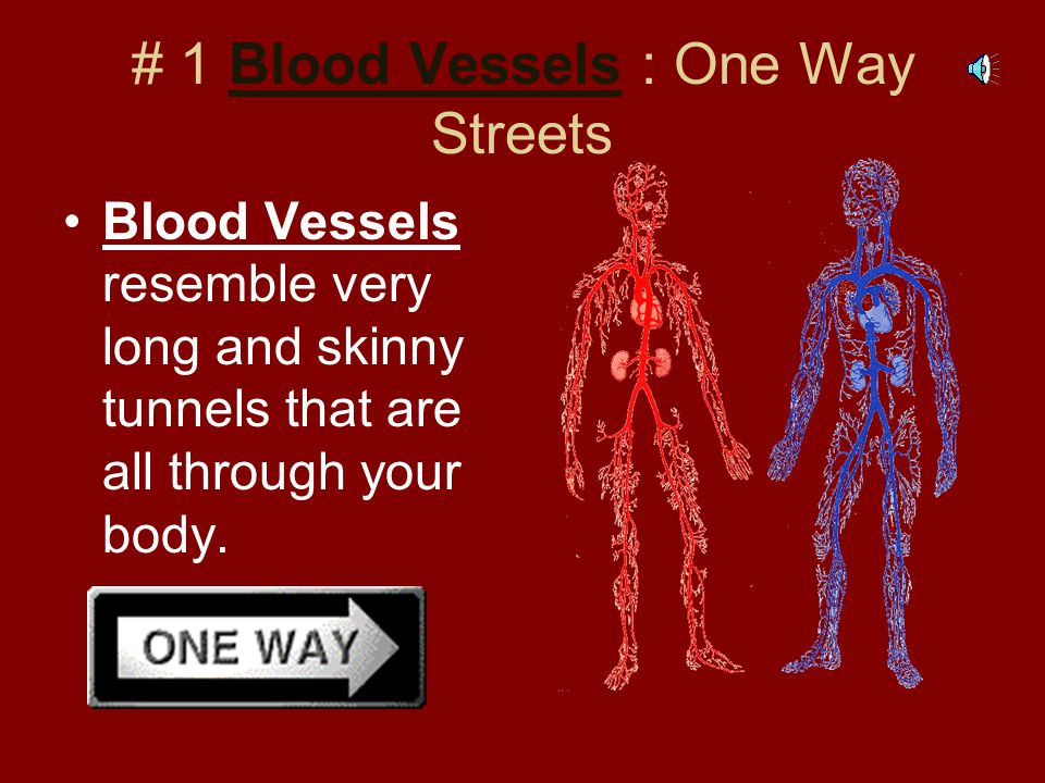 # 1 Blood Vessels : One Way Streets Blood Vessels resemble very long and skinny tunnels that are all through your body.