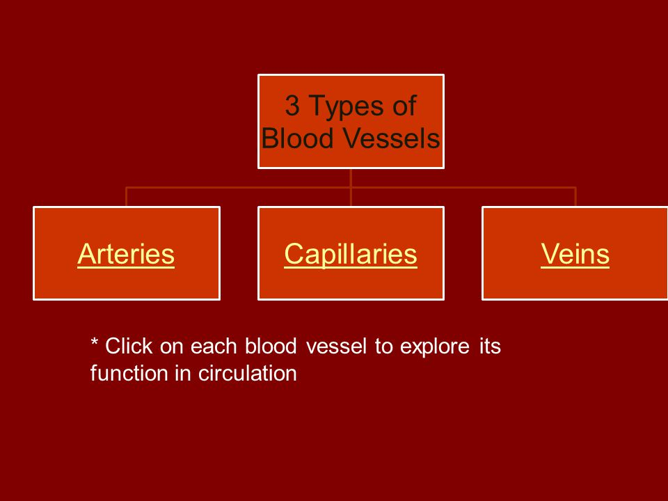 3 Types of Blood Vessels ArteriesCapillariesVeins * Click on each blood vessel to explore its function in circulation