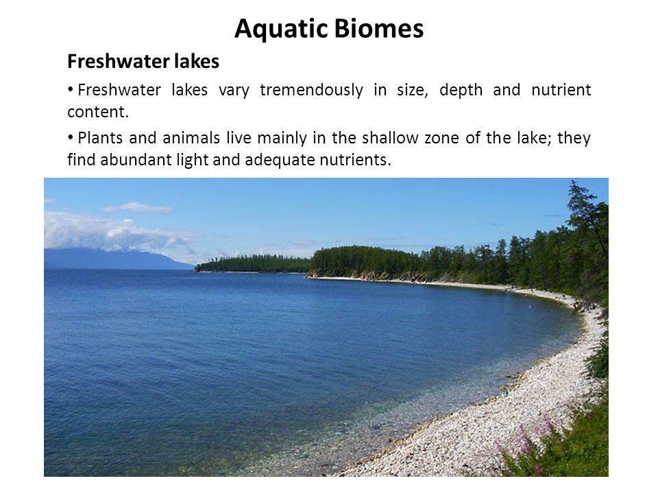 Aquatic Biomes Freshwater lakes Freshwater lakes vary tremendously in size, depth and nutrient content. Plants and animals live mainly in the shallow