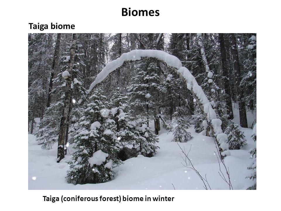 Biomes Taiga biome Taiga (coniferous forest) biome in winter