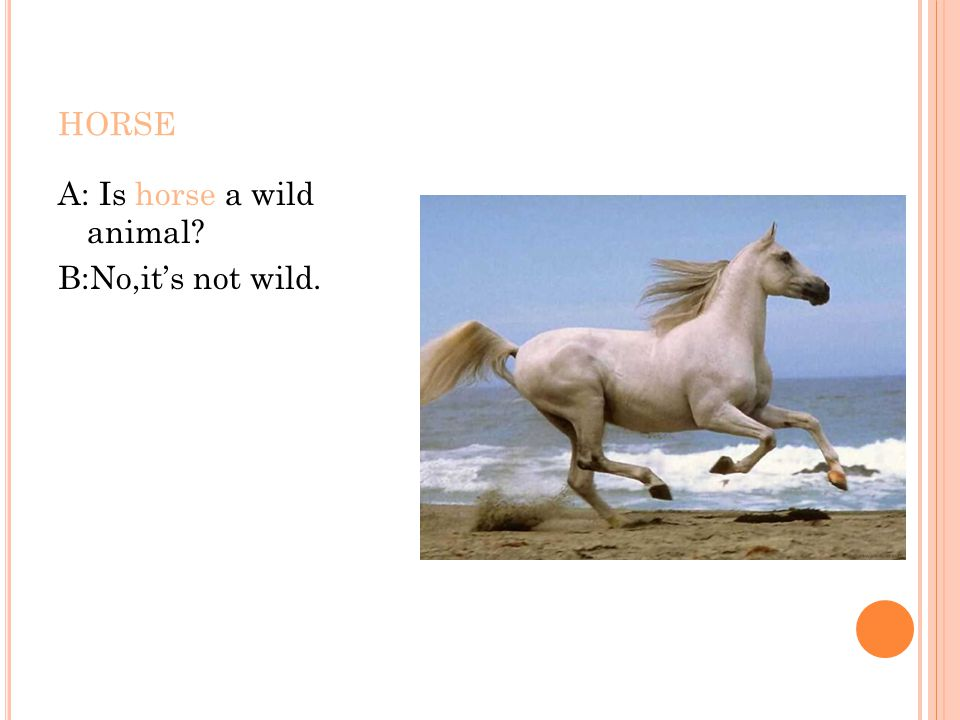HORSE A: Is horse a wild animal? B:No,it's not wild.