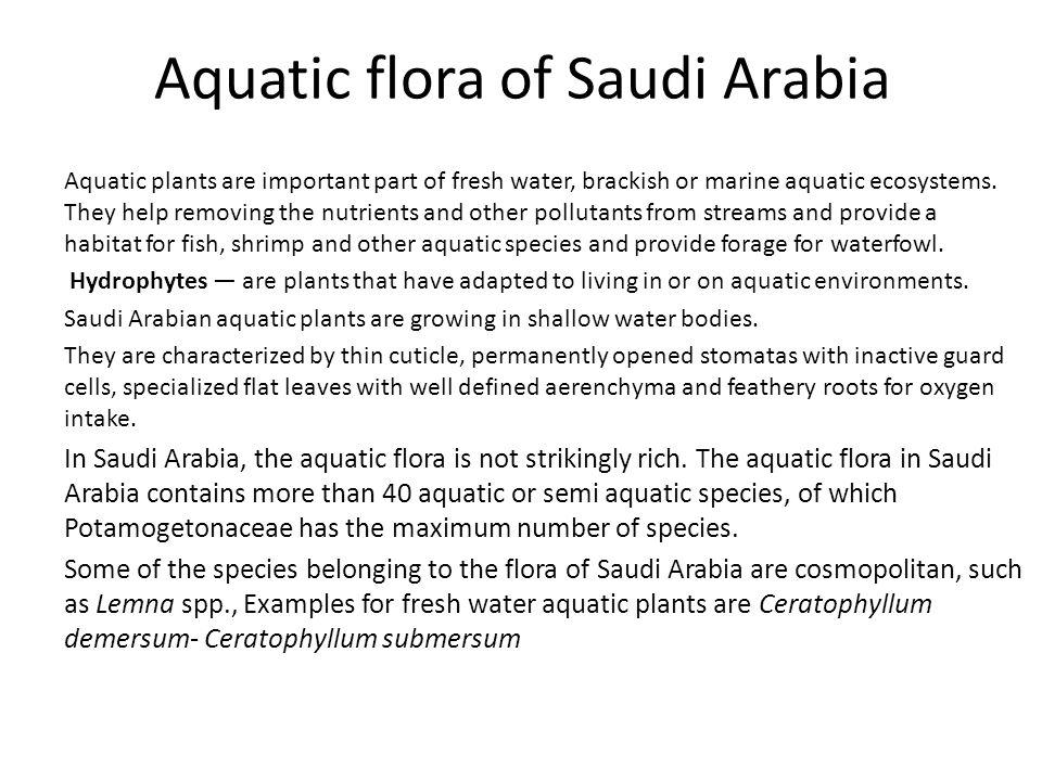 Aquatic flora of Saudi Arabia Aquatic plants are important part of fresh water, brackish or marine aquatic ecosystems. They help removing the nutrient