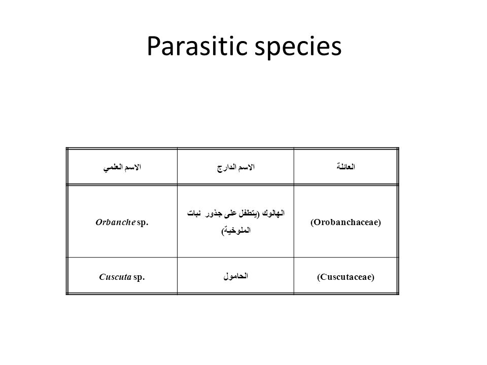 Parasitic species العائلةالاسم الدارجالاسم العلمي (Orobanchaceae) الهالوك (يتطفل على جذور نبات الملوخية) Orbanche sp. (Cuscutaceae)الحامولCuscuta sp.