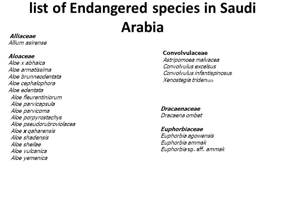 list of Endangered species in Saudi Arabia Alliaceae Allium asirense Aloaceae Aloe x abhaica Aloe armatissima Aloe brunneodentata Aloe cephalophora Al
