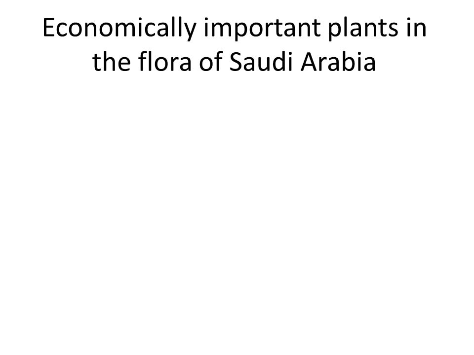 Economically important plants in the flora of Saudi Arabia
