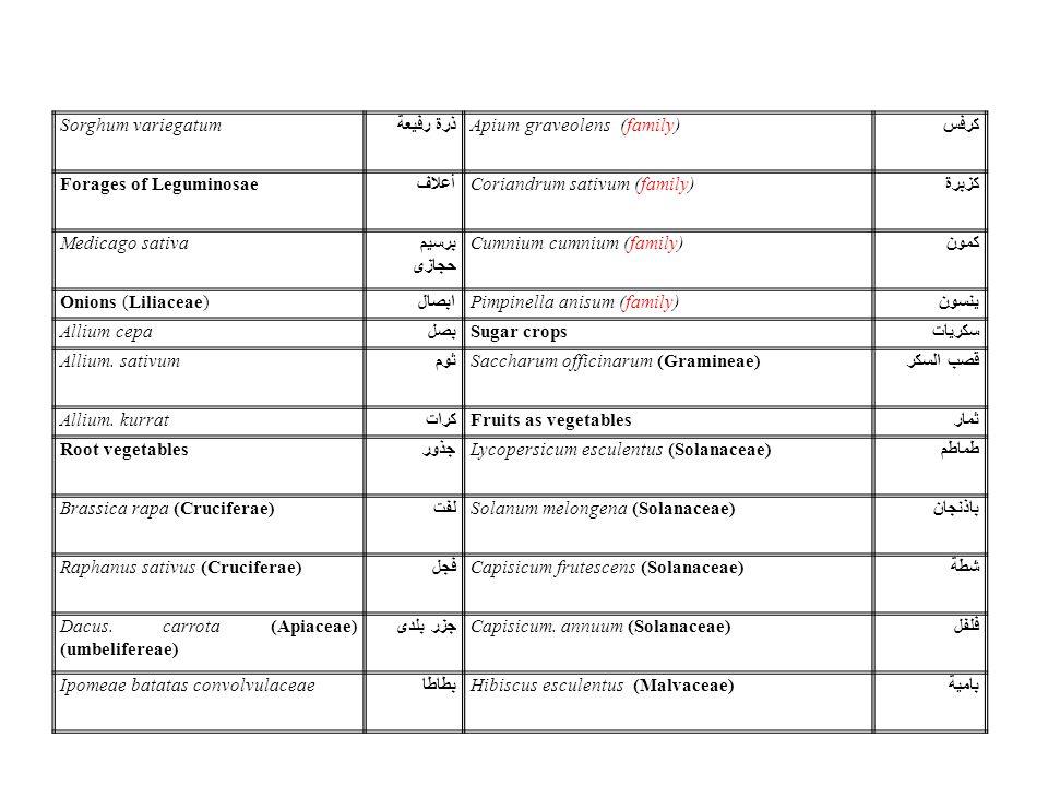 Sorghum variegatum ذرة رفيعة Apium graveolens (family) كرفس Forages of Leguminosae أعلاف Coriandrum sativum (family) كزبرة Medicago sativa برسيم حجازى