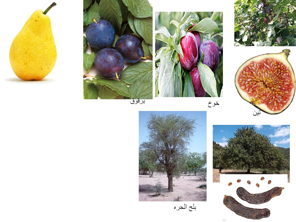 خوخ تين برقوق بلح الحره