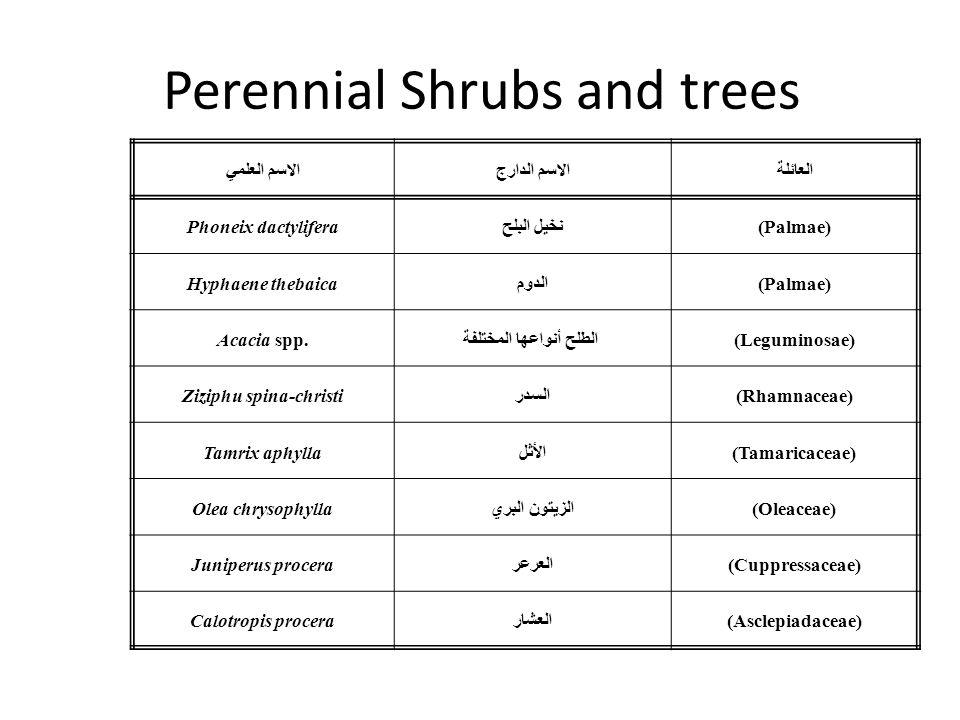 Perennial Shrubs and trees العائلةالاسم الدارجالاسم العلمي (Palmae)نخيل البلحPhoneix dactylifera (Palmae)الدومHyphaene thebaica (Leguminosae) الطلح أنواعها المختلفةAcacia spp.