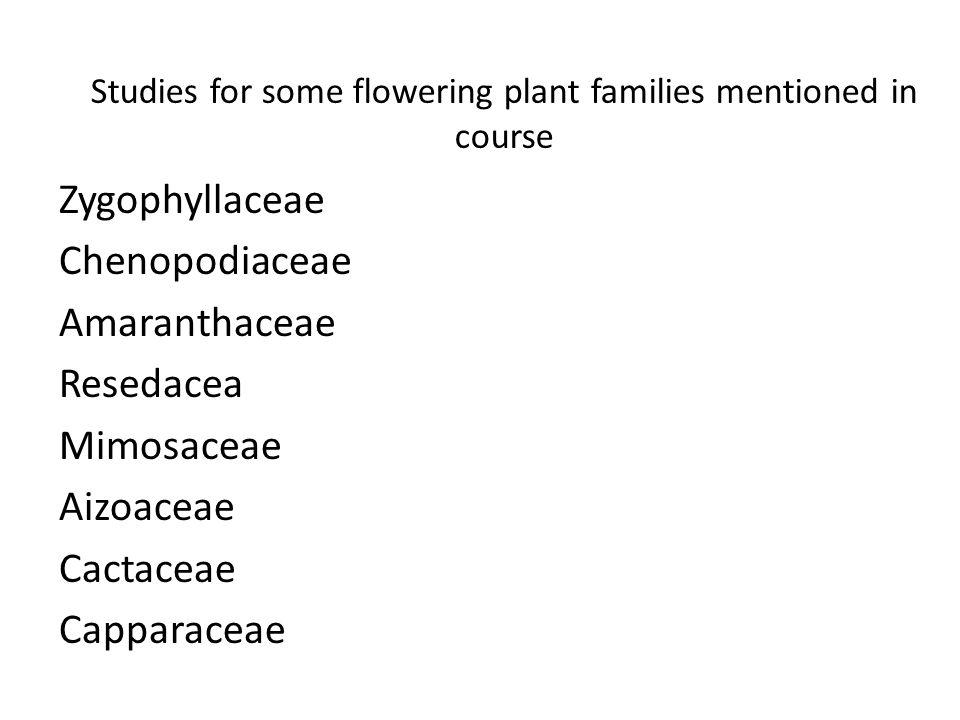 Studies for some flowering plant families mentioned in course Zygophyllaceae Chenopodiaceae Amaranthaceae Resedacea Mimosaceae Aizoaceae Cactaceae Cap