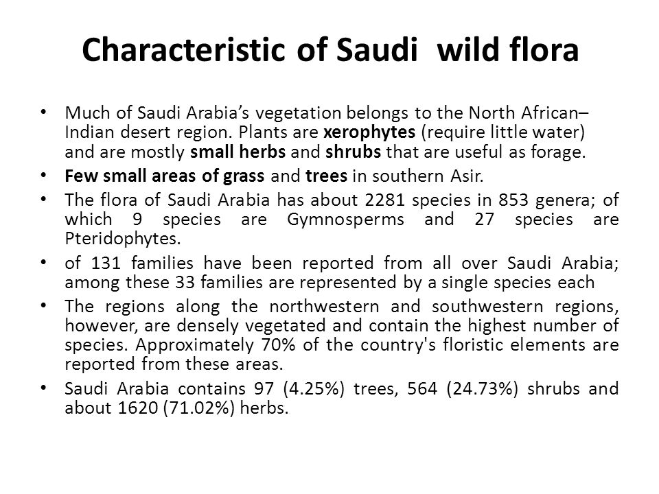 Characteristic of Saudi wild flora Much of Saudi Arabia's vegetation belongs to the North African– Indian desert region. Plants are xerophytes (requir