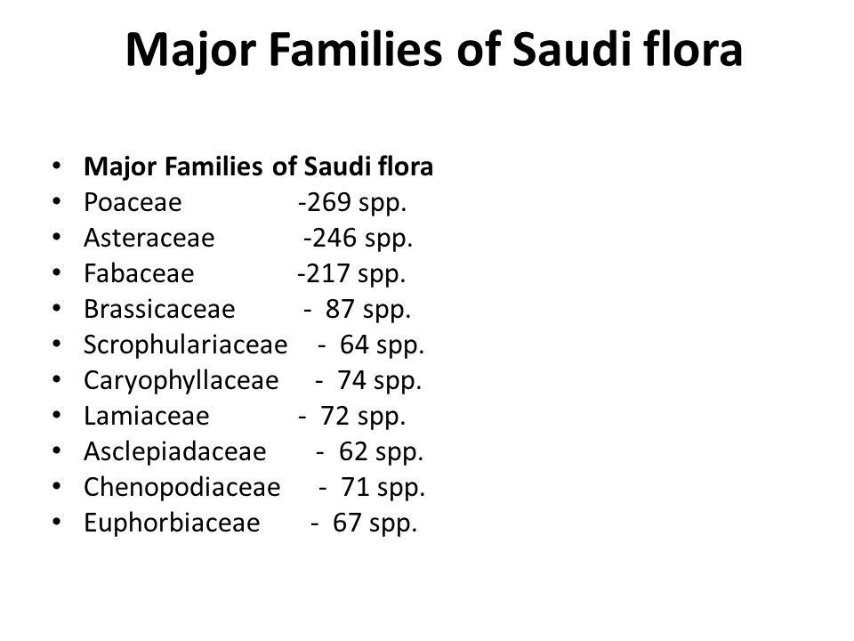 Major Families of Saudi flora Poaceae -269 spp. Asteraceae -246 spp. Fabaceae -217 spp. Brassicaceae - 87 spp. Scrophulariaceae - 64 spp. Caryophyllac