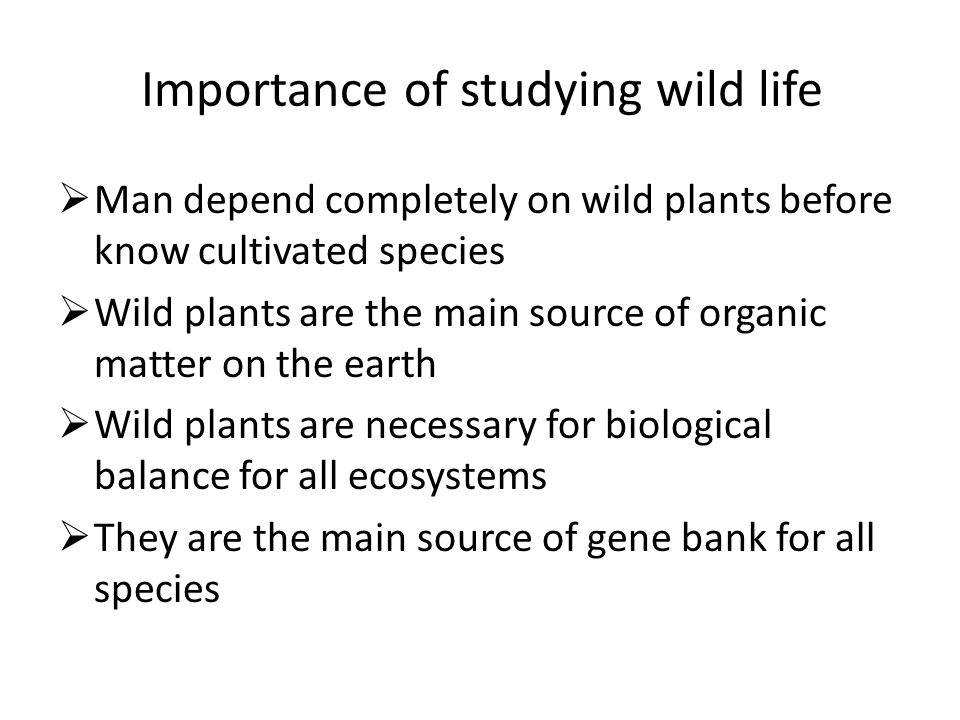 Importance of studying wild life  Man depend completely on wild plants before know cultivated species  Wild plants are the main source of organic ma