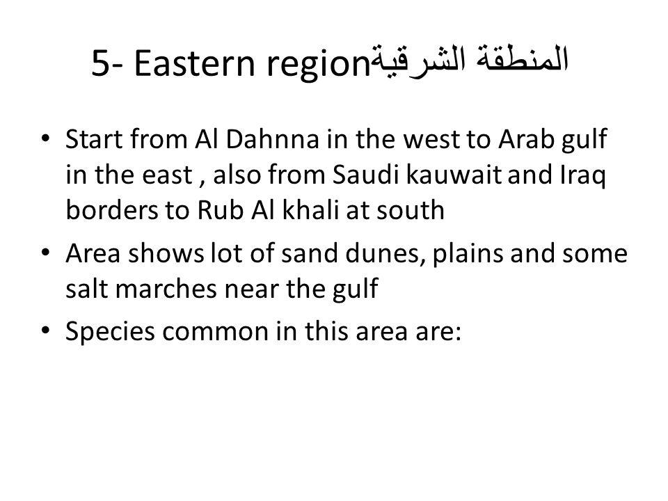 المنطقة الشرقية 5- Eastern region Start from Al Dahnna in the west to Arab gulf in the east, also from Saudi kauwait and Iraq borders to Rub Al khali at south Area shows lot of sand dunes, plains and some salt marches near the gulf Species common in this area are: