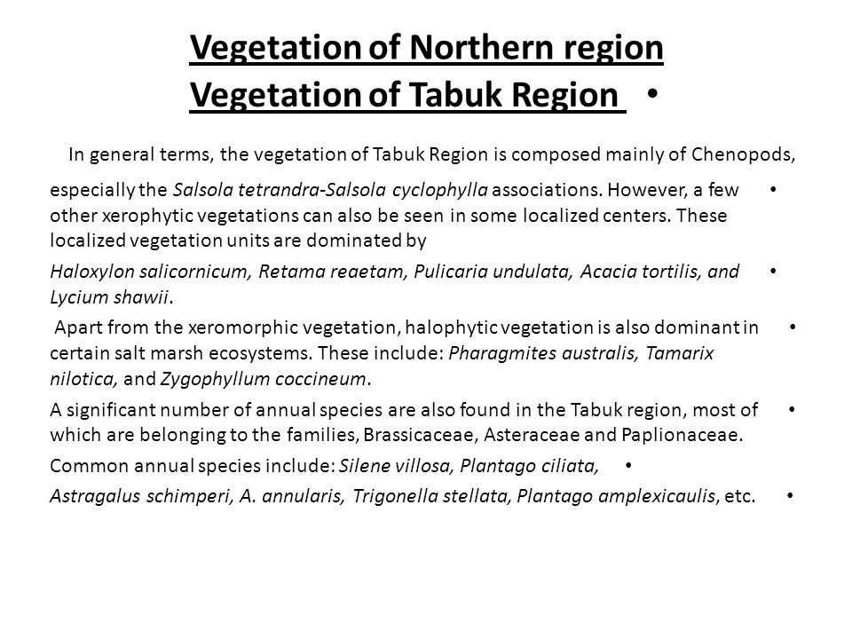 Vegetation of Northern region Vegetation of Tabuk Region In general terms, the vegetation of Tabuk Region is composed mainly of Chenopods, especially