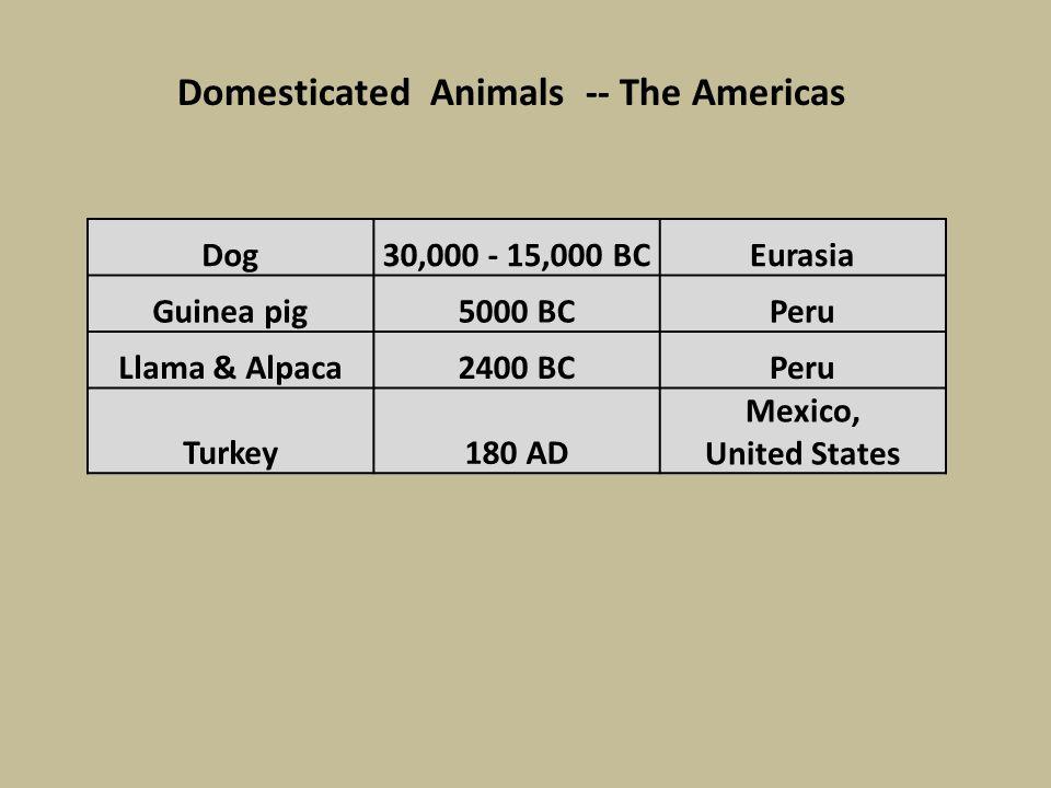 Dog30,000 - 15,000 BCEurasia Guinea pig5000 BCPeru Llama & Alpaca2400 BCPeru Turkey180 AD Mexico, United States Domesticated Animals -- The Americas