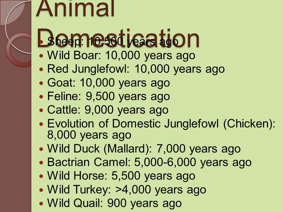 Animal Domestication Sheep: 10,500 years ago Wild Boar: 10,000 years ago Red Junglefowl: 10,000 years ago Goat: 10,000 years ago Feline: 9,500 years ago Cattle: 9,000 years ago Evolution of Domestic Junglefowl (Chicken): 8,000 years ago Wild Duck (Mallard): 7,000 years ago Bactrian Camel: 5,000-6,000 years ago Wild Horse: 5,500 years ago Wild Turkey: >4,000 years ago Wild Quail: 900 years ago