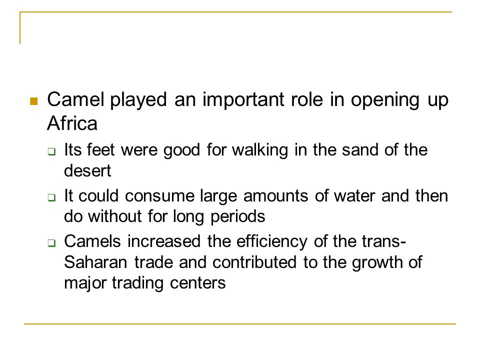 Camel played an important role in opening up Africa  Its feet were good for walking in the sand of the desert  It could consume large amounts of water and then do without for long periods  Camels increased the efficiency of the trans- Saharan trade and contributed to the growth of major trading centers