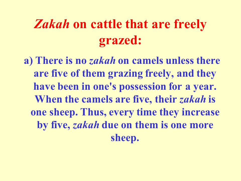 Zakah on cattle that are freely grazed: a) There is no zakah on camels unless there are five of them grazing freely, and they have been in one s possession for a year.