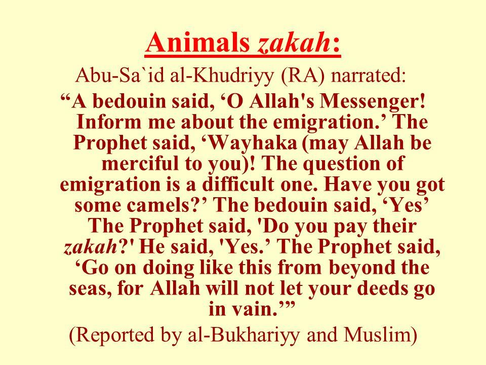 Animals zakah: Abu-Sa`id al-Khudriyy (RA) narrated: A bedouin said, 'O Allah s Messenger.