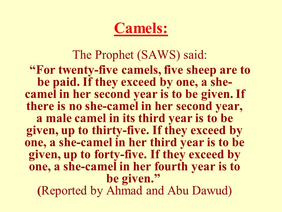 Camels: The Prophet (SAWS) said: For twenty-five camels, five sheep are to be paid.