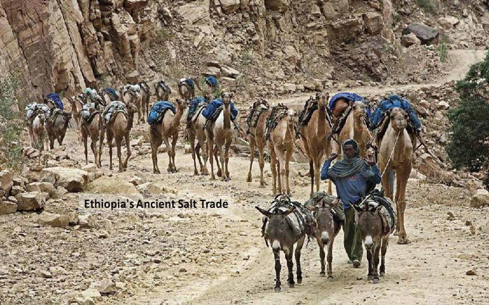 Camels in the Danakil desert in the Afar Triangle. (Ziv Koren/Polaris) 21