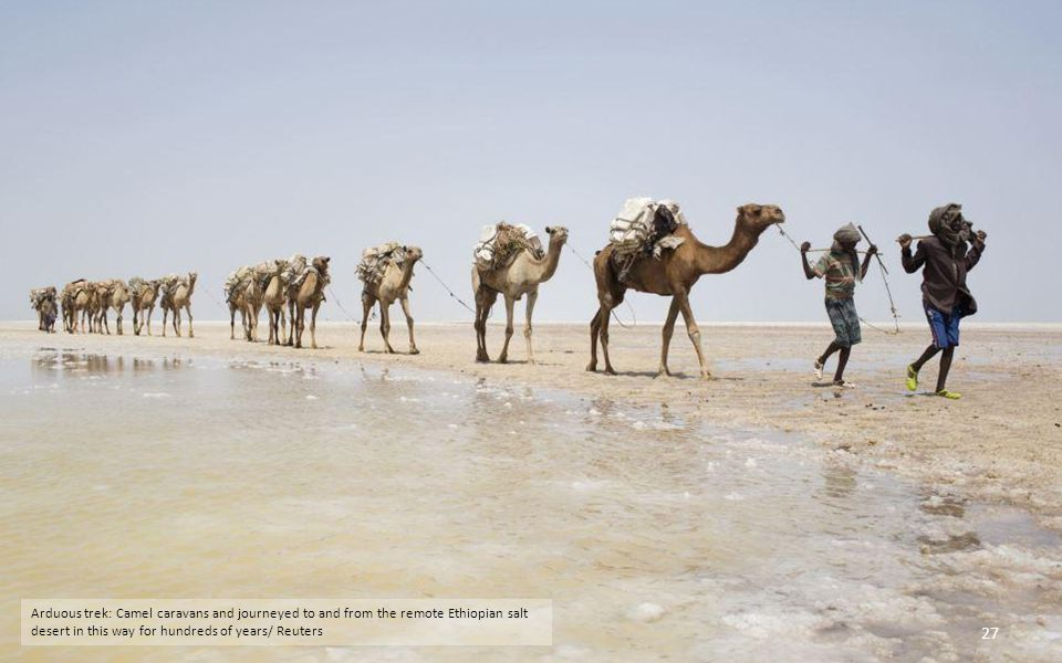Lonely landscape: A camel caravan loaded with slabs of salt can be seen making its way back to civilisation from the Danakil Depression in the north of the African country/ Reuters 26