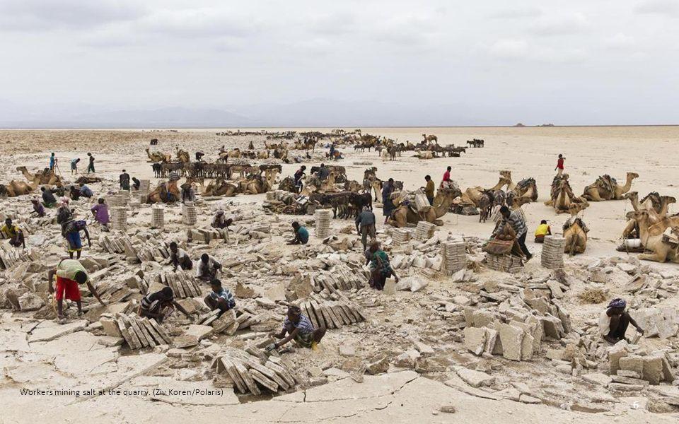 Dry heat: Scores of camels form a caravan to trek across the barren landscape in the African desert 46
