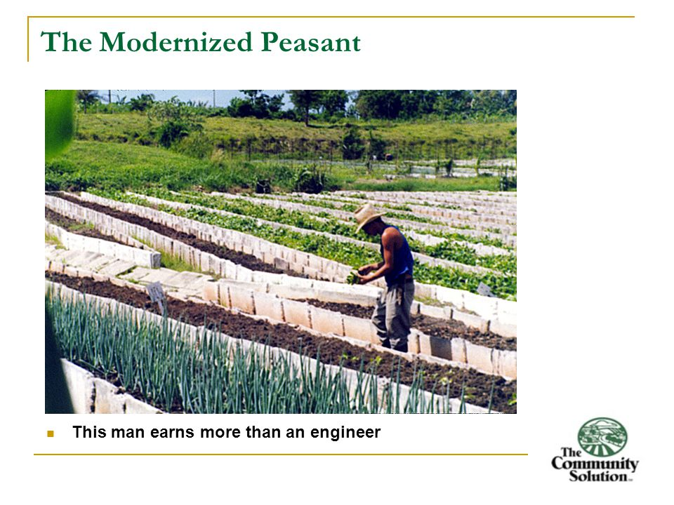 The Modernized Peasant This man earns more than an engineer
