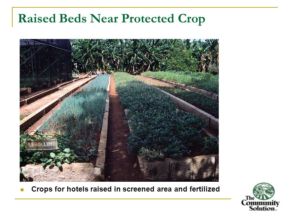 Raised Beds Near Protected Crop Crops for hotels raised in screened area and fertilized