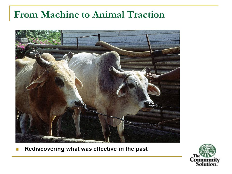 From Machine to Animal Traction Rediscovering what was effective in the past