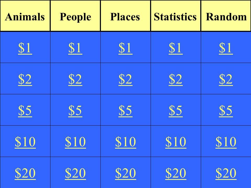 $2 $5 $10 $20 $1 $2 $5 $10 $20 $1 $2 $5 $10 $20 $1 $2 $5 $10 $20 $1 $2 $5 $10 $20 $1 AnimalsPeoplePlacesRandomStatistics