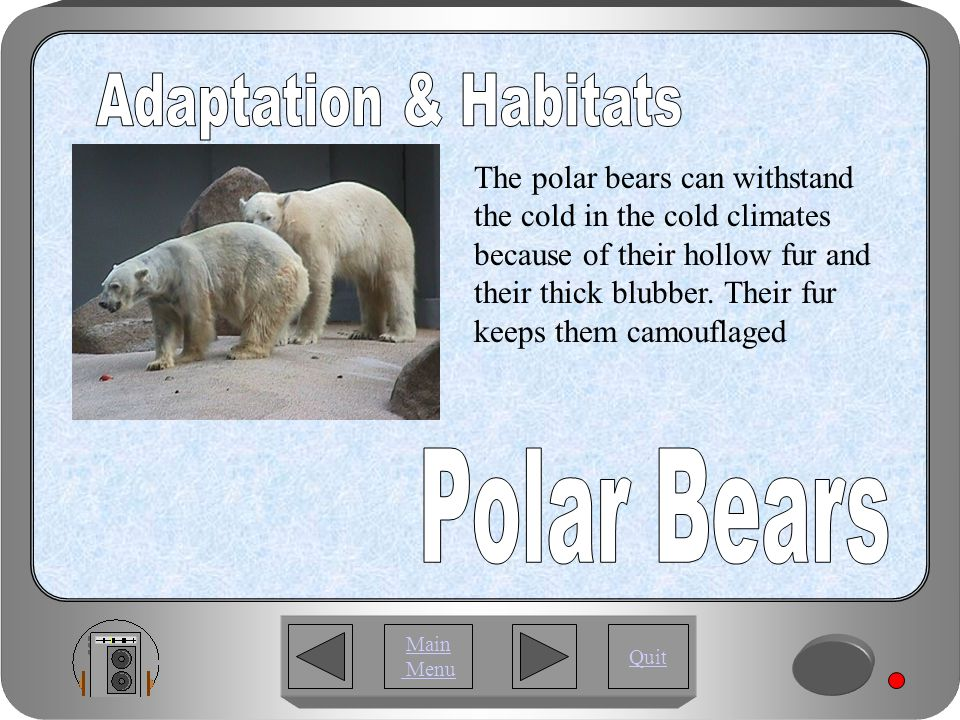 Quit Main Menu The orang utan and the polar bears feed on small berries.