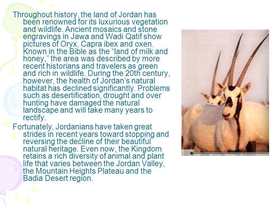Throughout history, the land of Jordan has been renowned for its luxurious vegetation and wildlife.